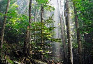 Биоградска-гора 2