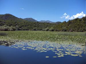 скадарское-озеро